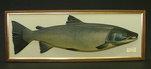 Salmon by John Tully
